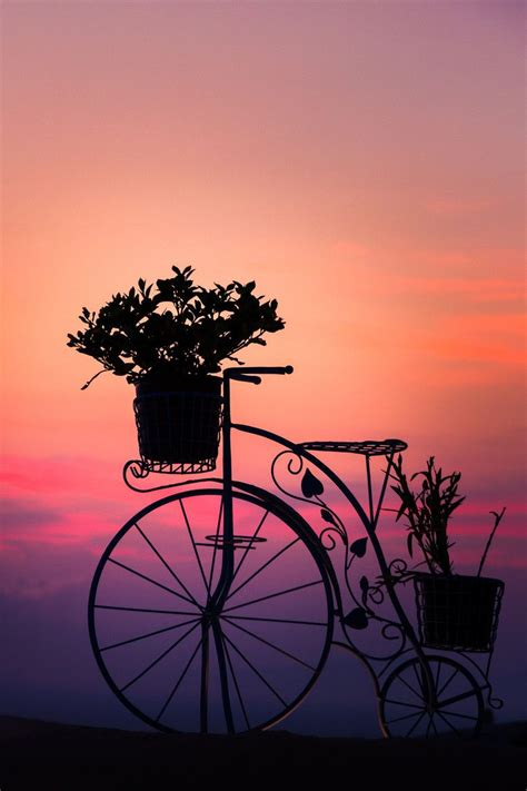 sunset bicycle cykel vehicle transportation romance