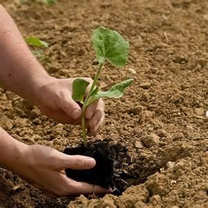 planting a garden gardening by the moon 2017 northern gardens the old farmer s almanac