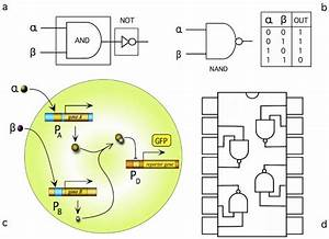 Simple Logic Gates Can Be Implemented Out From Minimal