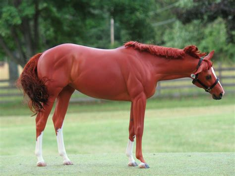 chestnut horse thoroughbred mare horses painted water victrix carol kroll colors williams flickr pigments halter breyer resin sculpted mohair customized
