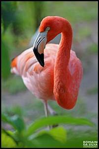 17 Best ideas about Pink Flamingos on Pinterest ...