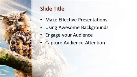 owl powerpoint template  powerpoint templates