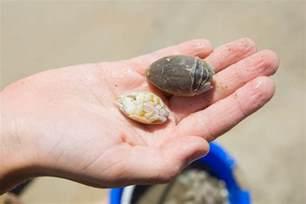 What Do Sand Flea Bites Look Like