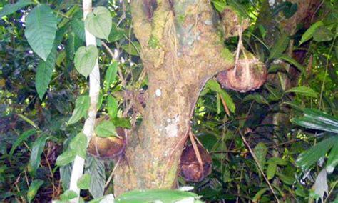 bayung gede kintamani memiliki  tradisi unik