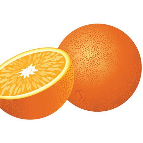 fresh orange fruit vector ai svg eps vector