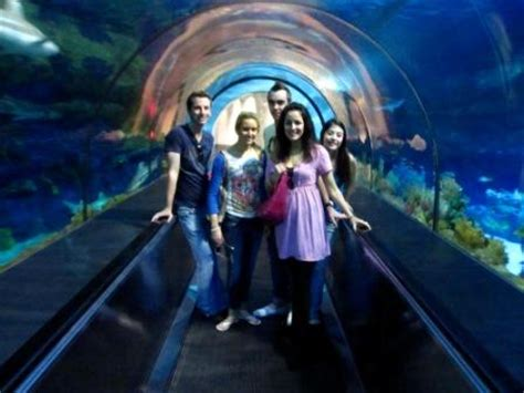 Riverdance Sunny San Diego Official Site