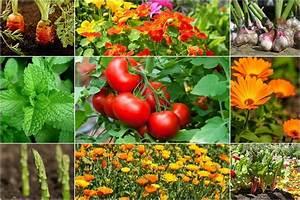 10 Tomato Companion Plants To Get The Most Delicious