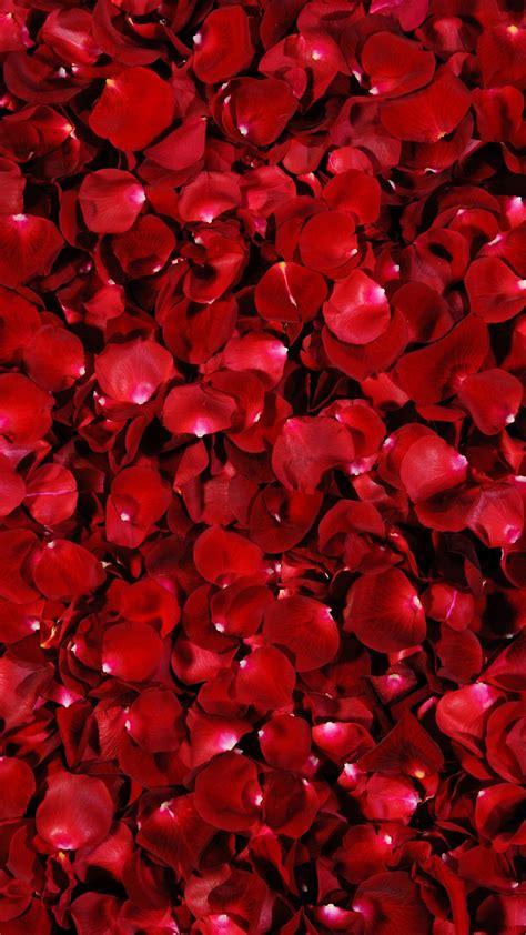 red rose petals background beautiful  red petal rose