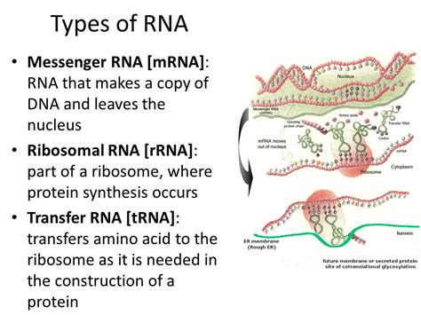 What Does Dna Stand For. What Is The Purpose Of