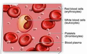 74 Blood Cells