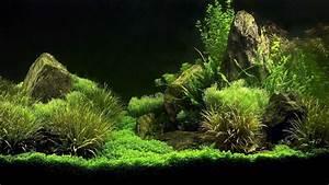 Freshwater Aquarium Design Ideas Fishy Okeanos Aquascaping ...