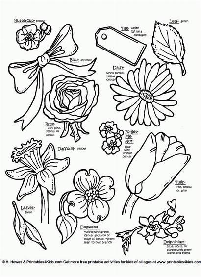 Flowers Word Names Coloring Flower Printables Cut