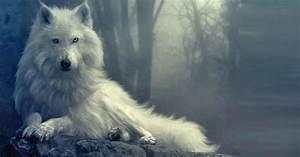 Bébé Loup Blanc : couverture facebook loup blanc photo et image couverture ~ Farleysfitness.com Idées de Décoration