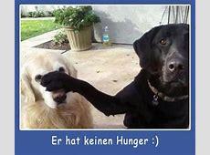 Suche Hunderasse Grosser schwarzer Hund Tiere, Rasse