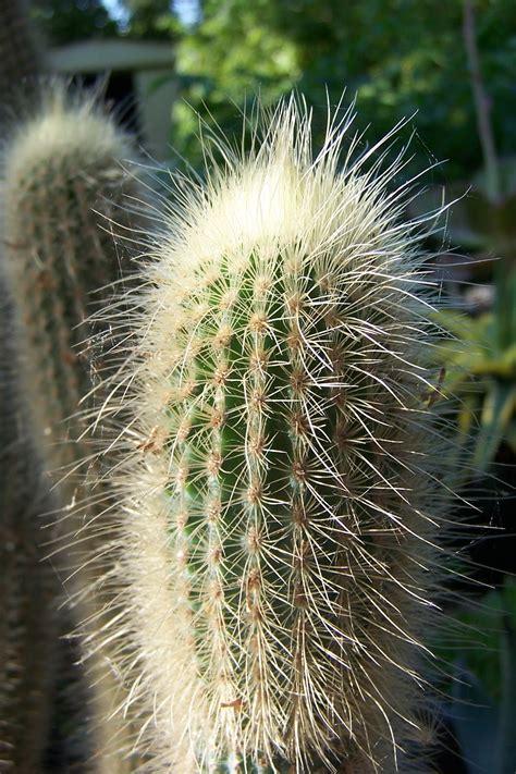 Oregon Cactus Blog: That Unnamed Cactus!