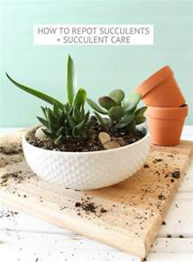How to Care for Succulent Cactus Plants
