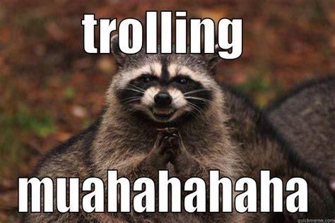 Evil Raccoon Meme - evil raccoon excellent bing images
