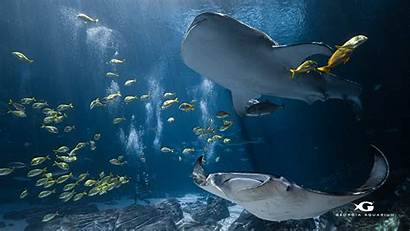 Aquarium Virtual Wallpapers Field Desktop Trip Digital