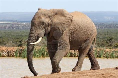 El Cuento Del Elefante Y La Mosca