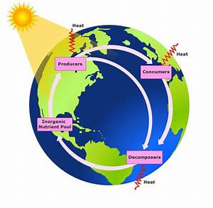 Biogeochemical Cycle  Definition  Types And Importance