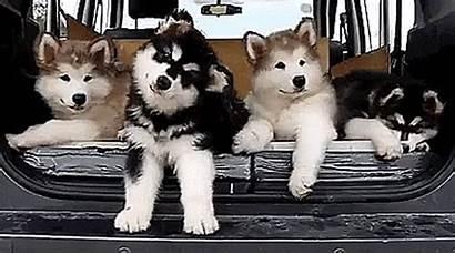 Cutest Signals Worst Puppies Turn Html5 Browser