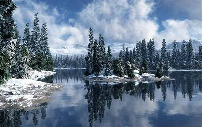 Forest Snow Snowy Christmas Screensavers Desktop Wallpapers
