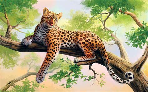 hd lazy leopard   tree branch wallpaper