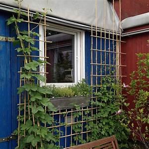 Rankhilfe Clematis Selber Bauen : rankgitter und sichtschutzelemente mit bambusst ben selber ~ Lizthompson.info Haus und Dekorationen