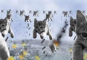 flying cats flying cats animals