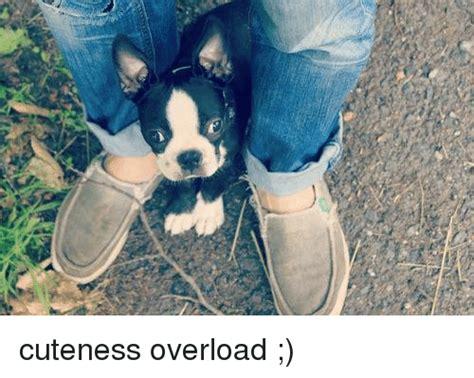 Cuteness Overload Meme - cuteness overload meme on sizzle