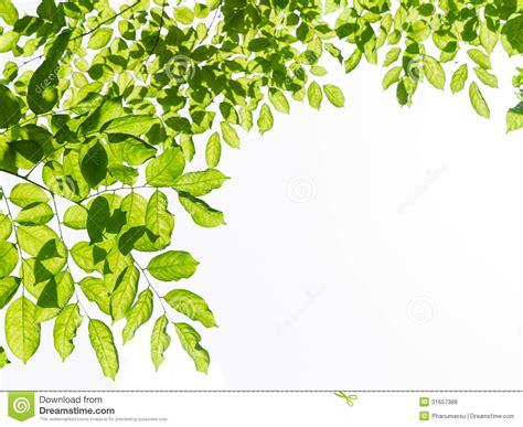 framing leaves green leaf frame stock photo image of leaf texture 31657388