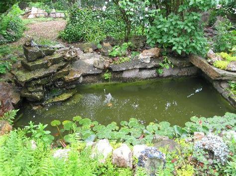 coy ponds pictures coy pond
