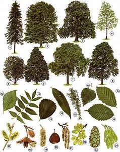 Immergrüne Sträucher Und Bäume : b ume und str ucher gartenbau theorie ~ Michelbontemps.com Haus und Dekorationen