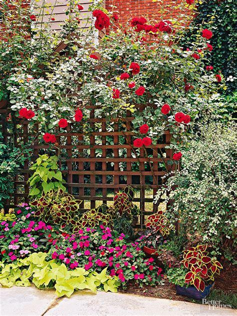 Why Won't My Climbing Rose Bush Bloom?