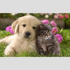 Schöne Katzenbilder  Tiere Hintergrundbilder Mit Einem