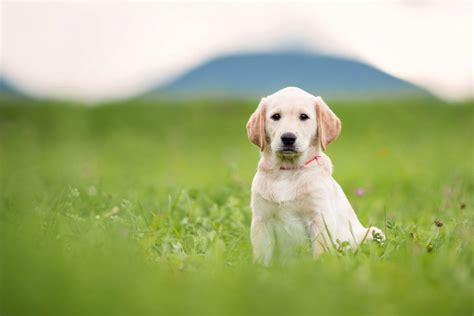 ein welpe zieht ein die ersten wochen isle  dogs