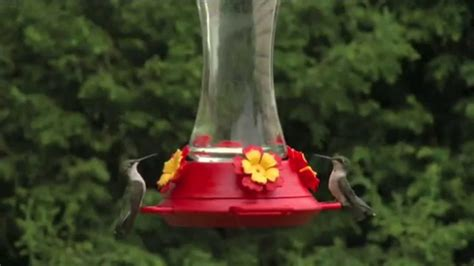 How To Set Up Your Hummingbird Feeder From Perky Pet