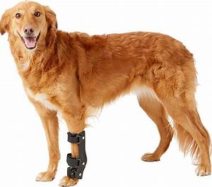 Handicappedpets, Carpal, Style, Front, Leg, Dog, Splint, X