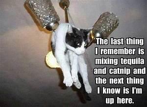 drunk cat - Jokes, Memes & Pictures