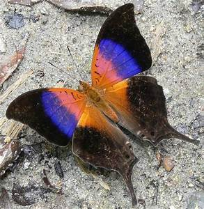 Most Colorful Butterfly Species
