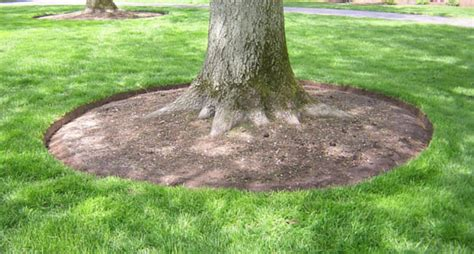 mulching for healthier trees value tree service