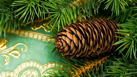 pine cone wallpapers wallpaper cave