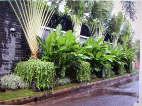 jual pohon pisang kipas pisang heliconia tukang taman