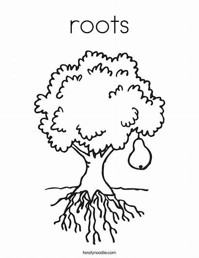 Roots Coloring Tree Pear Built California Usa