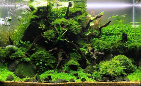 moss rocks flowgrow aquascapeaquarium