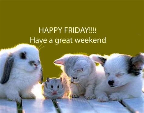 Have A Great Weekend Quotes Cute Animals Quote Pets Friday