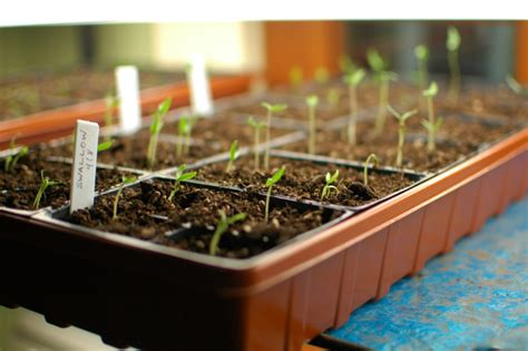 How To Start A Flower Or Vegetable Garden From Seeds