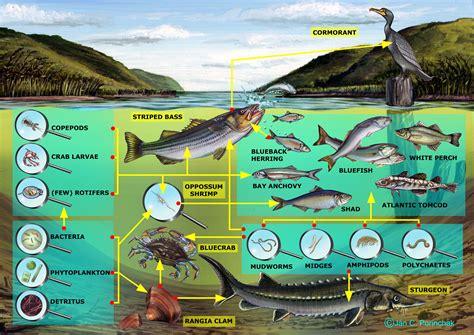 web cuisine food web diagram free wiring diagram