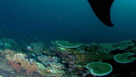 Five Reasons To Visit Kadavu Island Fiji