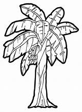 Rainforest Trees Drawing Clipart Getdrawings sketch template